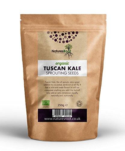 Nature's Root Biologisch 'Nero di Toscana' boerenkoolzaad 500g (ongeveer 30000 zaden) - Cavolo Nero | Zwarte Kool | Toscaanse boerenkool | Groentezaden zaaien | Planten | Kiemen