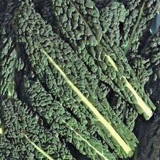 Groente Borecole Black Toscane Boerenkool Appx 1200 Zaden