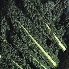 Groente Borecole Black Toscane Boerenkool Appx 300 Zaden