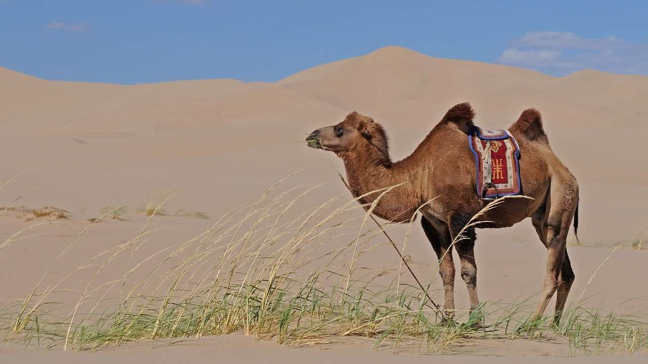 Beste Kamelenmelk: Winkelgids en Aanbevelingen (10/21)